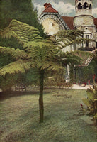1912 Tree Fern Garden Shrubbery Nightingale Park Darjeeling India Chromolithogra