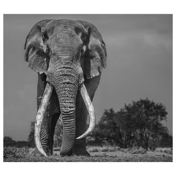 Colossus by David Yarrow, Digital Print, 2018