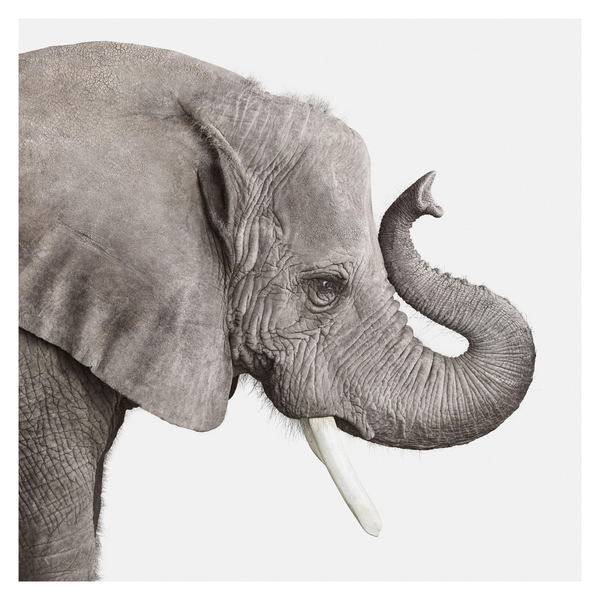Elephant No. 2 by Randal Ford, Digital Print, 2018