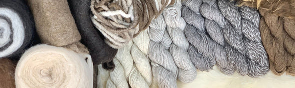 Icelandic Wool Fiber | Copia Cove Icelandic Sheep & Wool