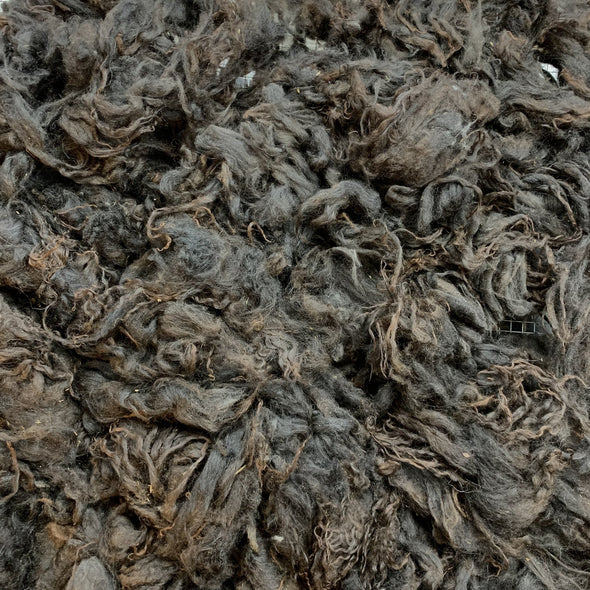 0475 Black Mouflon Raw Lamb Fleece 23 oz Icelandic - Copia Cove Icelandic Sheep & Wool