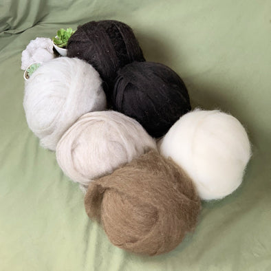 Icelandic LAMB Wool Roving 8oz - Extra Soft - Natural Color for Spinning - Felting - Crafts - Copia Cove Icelandic Sheep & Wool