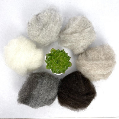 Icelandic LAMB Wool Roving - Extra Soft - Natural Color for Spinning - Felting - Crafts - Copia Cove Icelandic Sheep & Wool