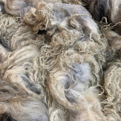 0101 Badgerface Raw Lamb Fleece 33 oz Icelandic