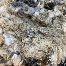 Load image into Gallery viewer, 2028 Badgerface Raw Lamb Fleece 40 oz Icelandic