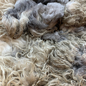 2028 Badgerface Raw Lamb Fleece 40 oz Icelandic
