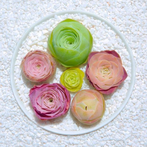 Succulent Roses - 200 seeds - Jala & Noor Internationally sourced Arabic and Islamic goods