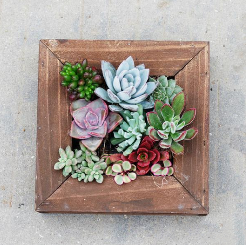 Wall Mounted Succulent Frame Planter - Jala & Noor Internationally sourced Arabic and Islamic goods