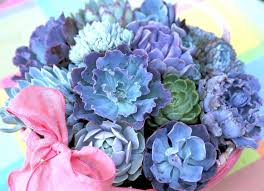 We've got the Blues Succulents 100 Seeds - Jala & Noor Internationally sourced Arabic and Islamic goods
