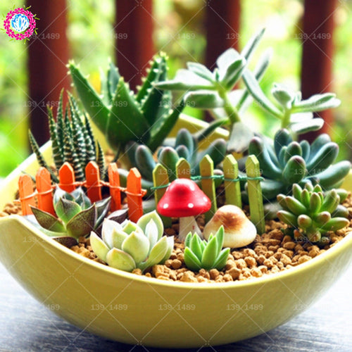 Rainbow Colored Succulent Seeds - Jala & Noor Unique Gardening and Home Products
