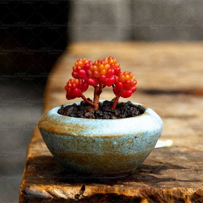 Berry-licious Succulents - 200 seeds - Jala & Noor Unique Gardening and Home Products