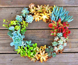 Mini Succulent Nursery - 204 Seeds - Jala & Noor Internationally sourced Arabic and Islamic goods