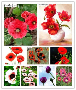 Poppy Heaven - 100 - 2000 Seeds - Jala & Noor Internationally sourced Arabic and Islamic goods