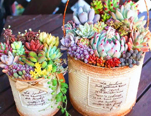 Mountainside Succulents - 203 Seeds - Jala & Noor Unique Gardening and Home Products