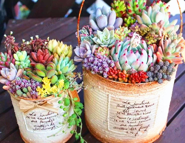 Mountainside Succulents - 203 Seeds - Jala & Noor Internationally sourced Arabic and Islamic goods