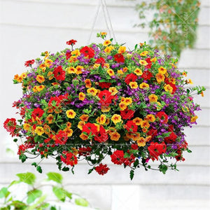 Pretty Petunias - 200 Seeds - Jala & Noor Internationally sourced Arabic and Islamic goods