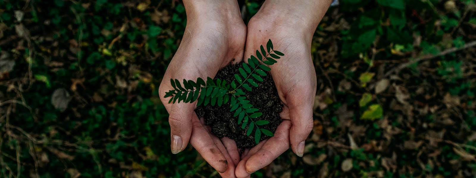Hands holding plant, eco friendly