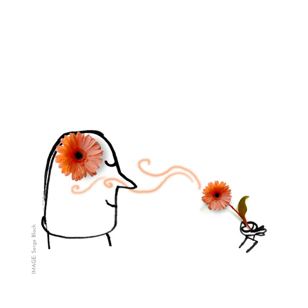 Line art illustration of head smelling flower by French artist Serge Bloch
