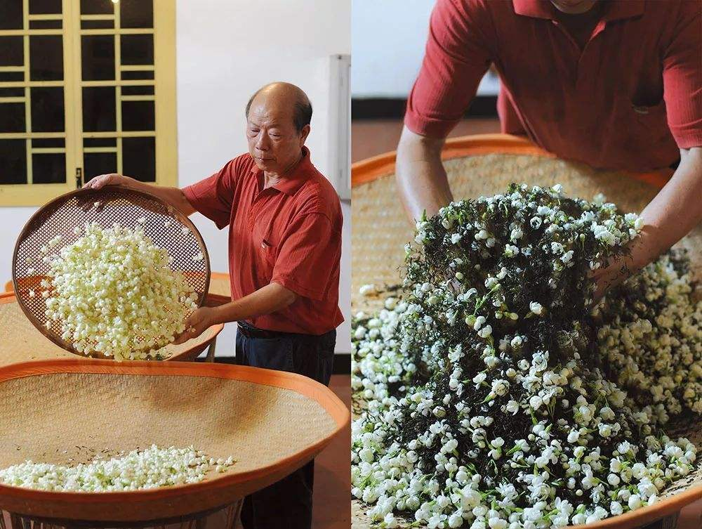removing jasmine flowers and re-scenting