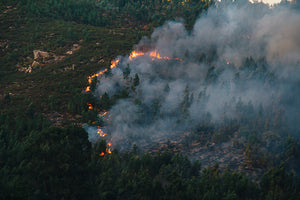 SOS! Help the Amazon Rainforest fire situation, here is how...