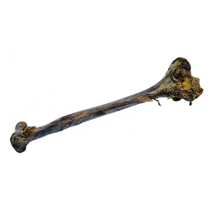 Ostrich Bone Femur bone dog treats