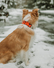 Load image into Gallery viewer, Mulan Inspired Dog Collar