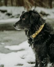Load image into Gallery viewer, Beauty and the Beast Inspired Dog Collar