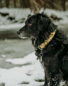Beauty and the Beast Inspired Dog Collar