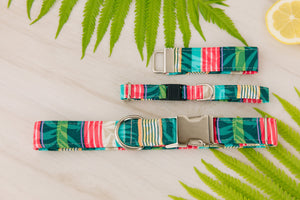 Bermuda Beach Cat Collar