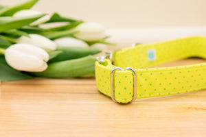 Neon Yellow-Green Customizable Dog Collar