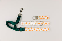 Load image into Gallery viewer, Watercolour Pumpkin Halloween Matching Dog Leash