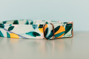 Minty Clementine Water Resistant Dog Collar