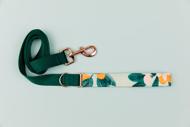 Minty Clementine Matching Dog Leash