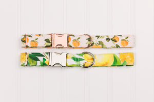 Lemons Dog Collar
