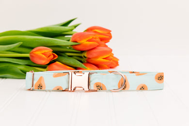 Coral Papaya Water Resistant Dog Collar