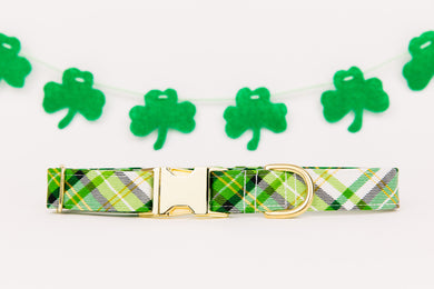 St Patrick's Day Green, White and Gold Dog Collar