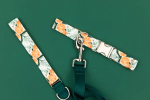 Orange Spiced Water Resistant Dog Collar