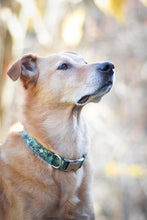 Load image into Gallery viewer, Green Poinsettia Dog Collar
