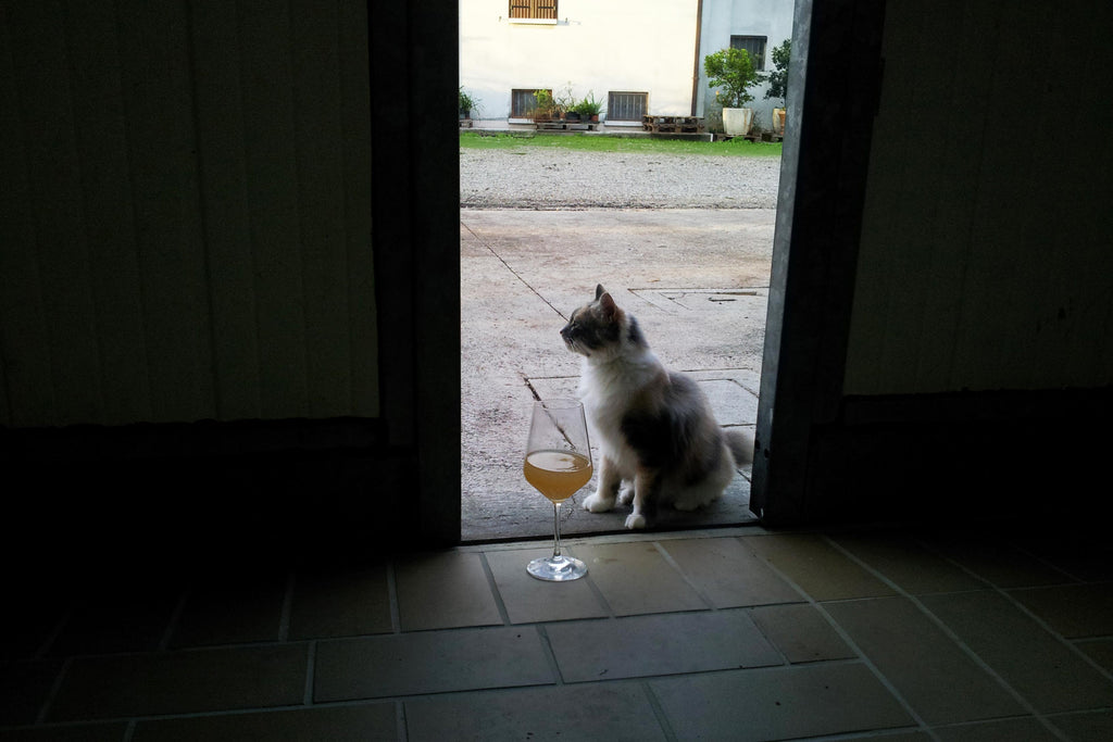 Carolina Gatti, Natural Wine, Prosecco, Ancestral Method, Glera, Italian Wine, Cat and Wine, Primal Wine - primalwine.com
