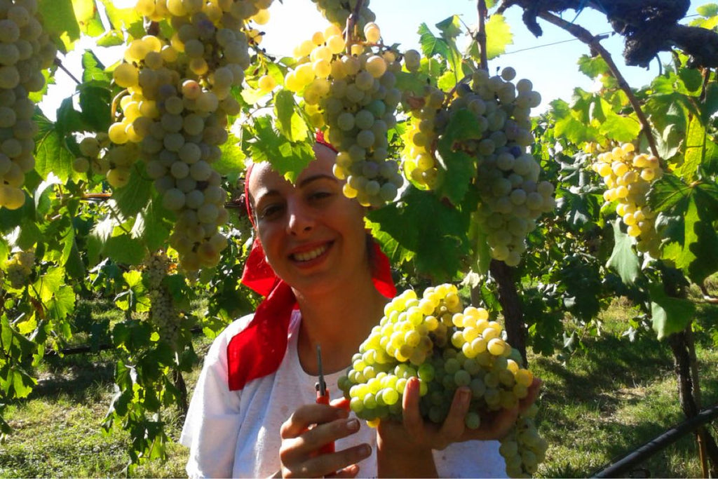 Folicello Winery, Harvest in the Vineyards, Emilia-Romagna, Natural Wine, Organic Wine, Primal Wine - primalwine.com