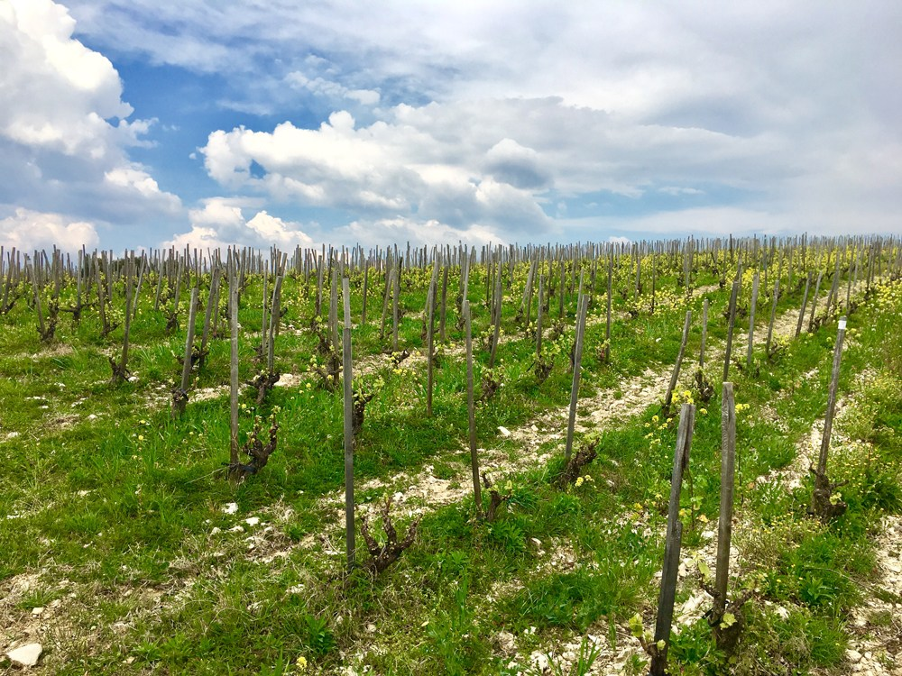 Podere le Boncie vineyard for Le Trame Rosso di Toscana red wine from Tuscany