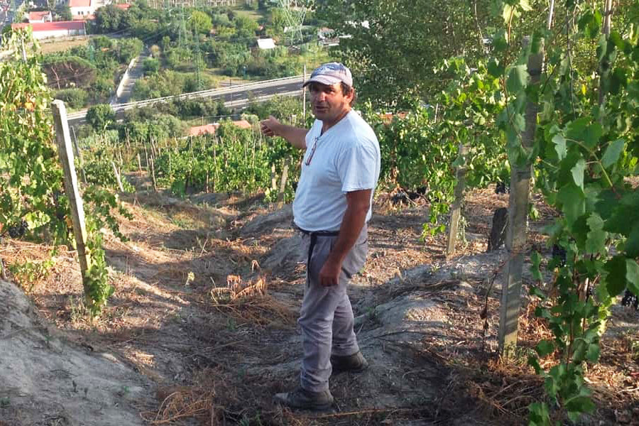 Raffaele Moccia Natural Winemaker of Agnanum, Natural Wine, Heroic Viticultural, Winery in Campania, Southern Italy