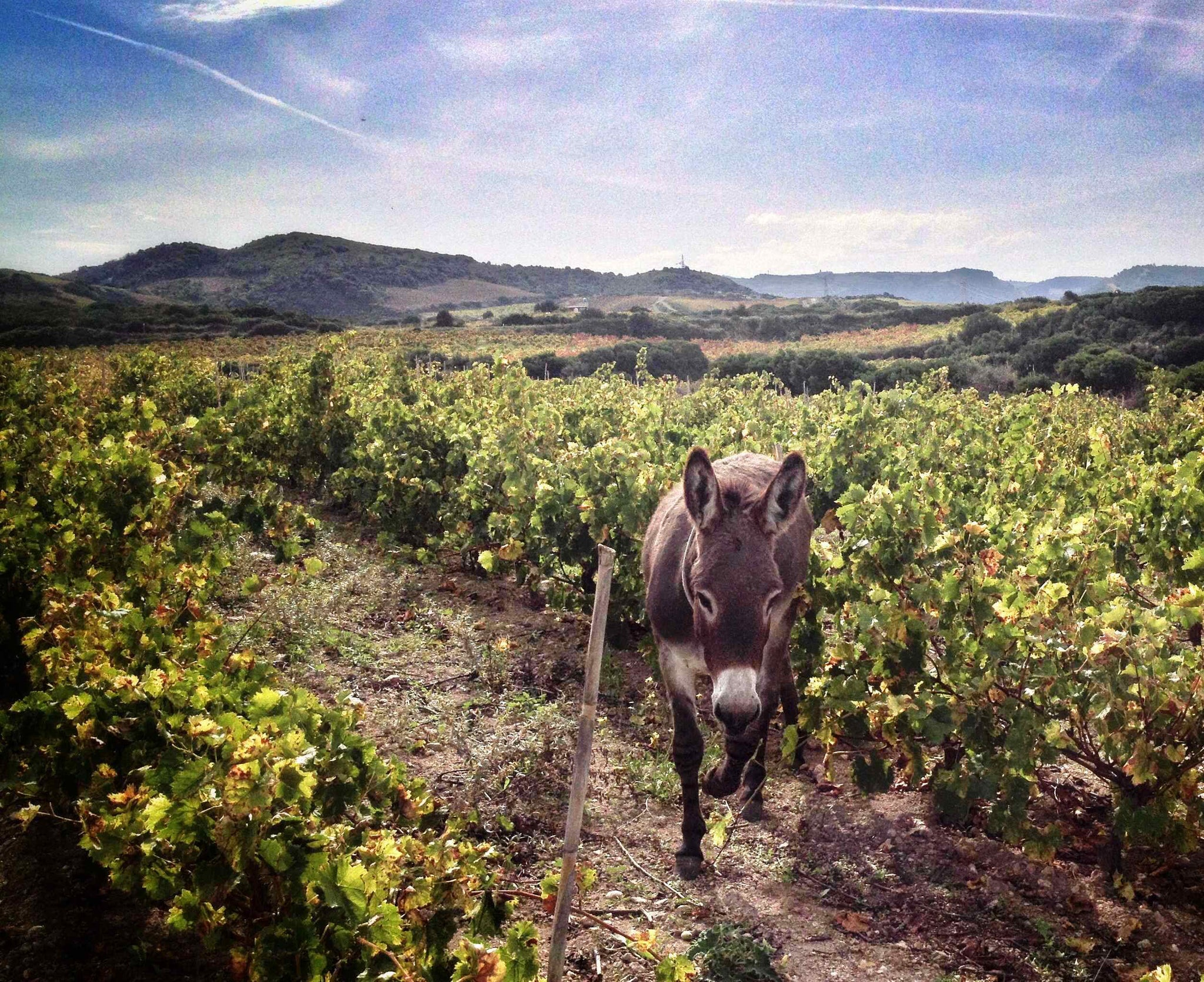 Tenute Dettori natural wine biodynamic wine estate located in Sardinia, Italy