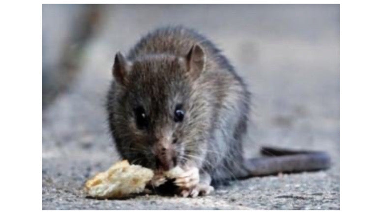 Hantavirus kills man in China's Yunnan province amid COVID-19 pandemic