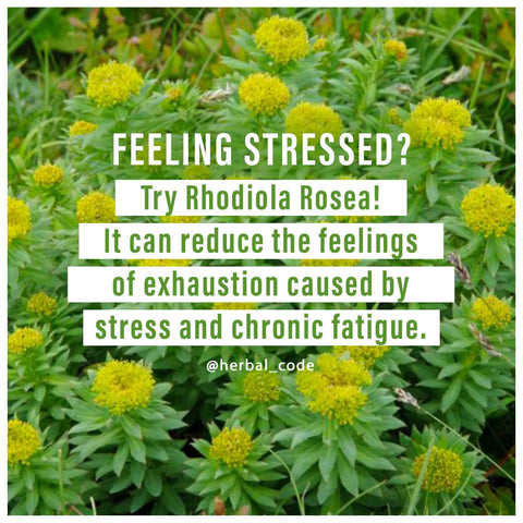 rhodiola rhodiola rosea rosea gaia herbs rhodiola rosea supplement nutrachamps rhodiola extract gaia ashwagandha root capsules rhodiola powder focus select stress pills metabolic synergy rodiola vh nutrition rhodiola capsules adiponectin rhodiola supplement rhodiola rosea organic rhodiola root rhodiola root extract now rhodiola rhodiola rosea root extract rhodiola 250 mg rhodiola 500mg