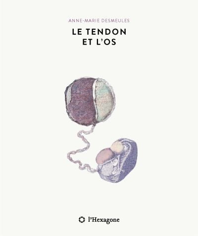 TENDON ET L'OS
