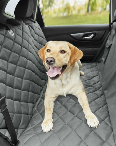 Labrador in the back of a car sitting on a padded car seat cover.