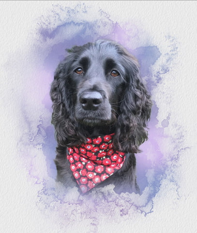 Charley our rescue spaniel wearing her washable fabric Red Poppies dog collar and bandana. Handmade in the U.K.