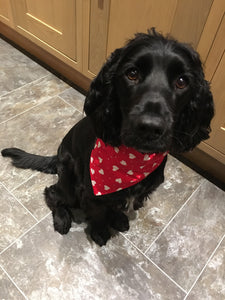 Fabulous bright red cotton fabric dog bandana with pretty little white hearts dotted all over. This is my favourite and Charley looks adorable in it!