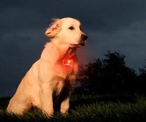 LED Dog Collar Tag